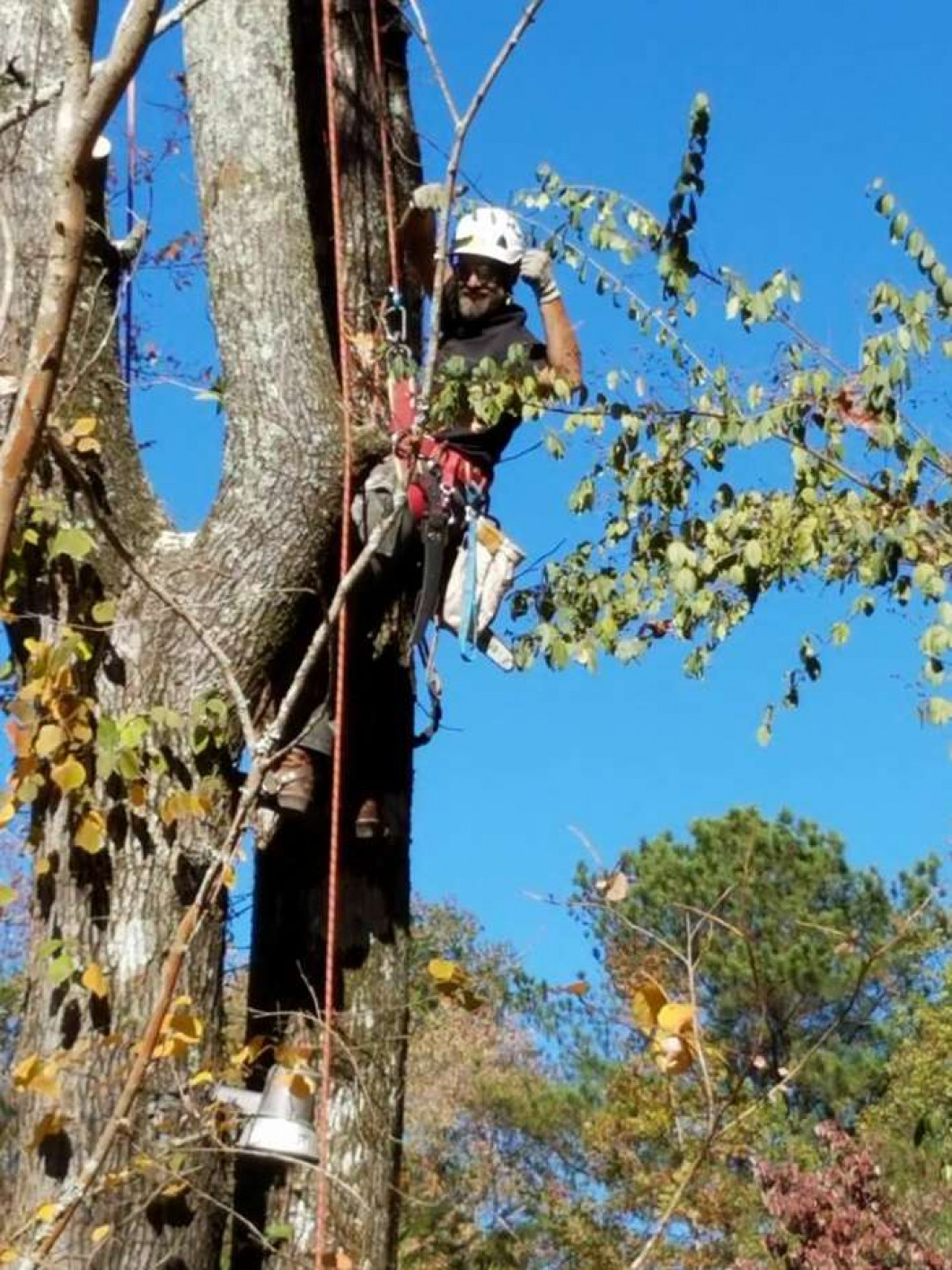 Fallen Tree? Don't Panic - Call an Arborist.